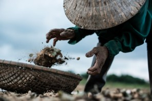 Close up action shot of Vietnamese farmer near Hoi An