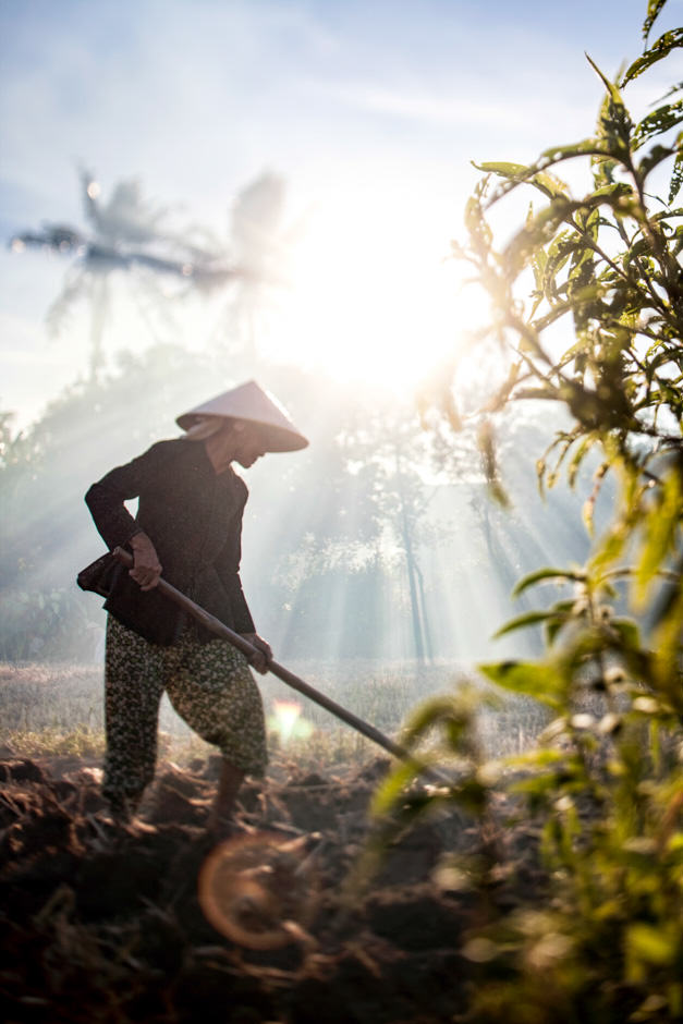 woman plowing field with smoke at sunset, Vietnam