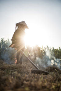 Woman gathering rice straw to burn them at sunset