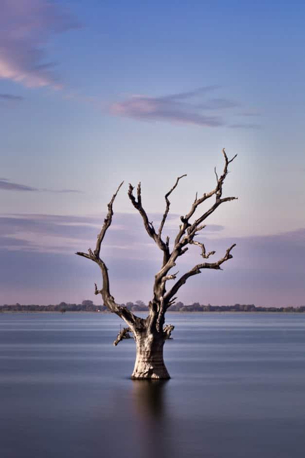 A dead tree on the river near U Bein bridge, Mandalay