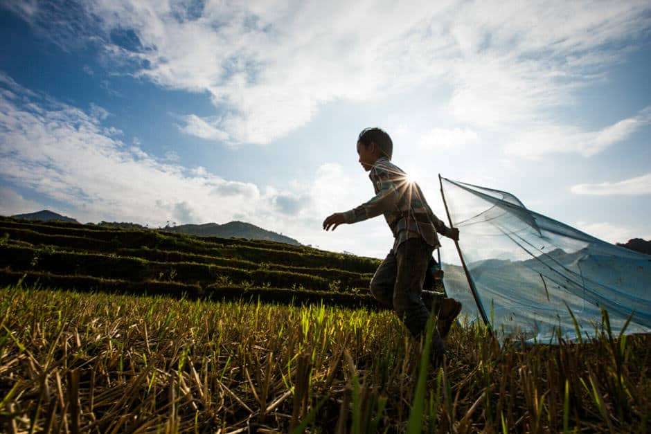 2 Hmong boys running in a rice field to catch crickets in Dong Van, Vietnam.