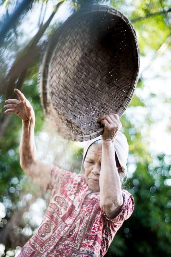 Vietnamese woman drying sesame seeds