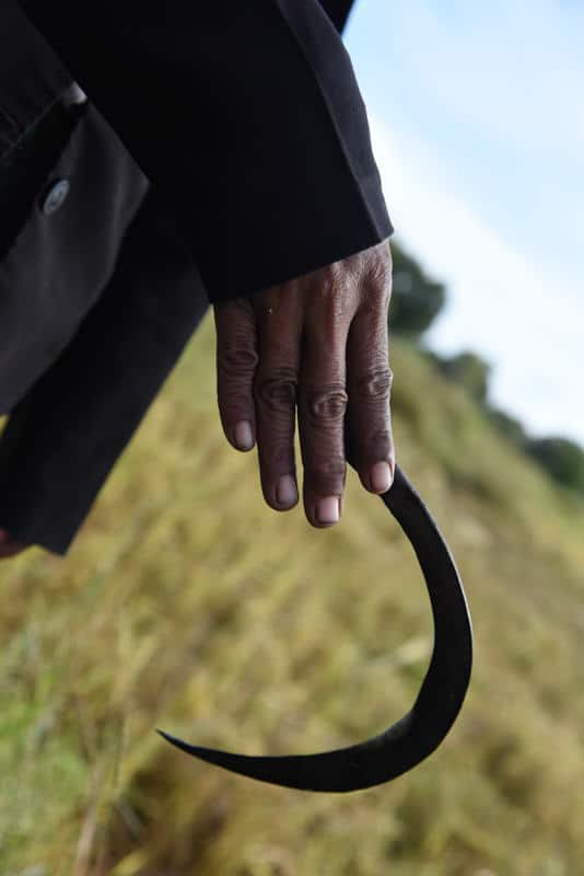 Man holding a sickle in a rice field