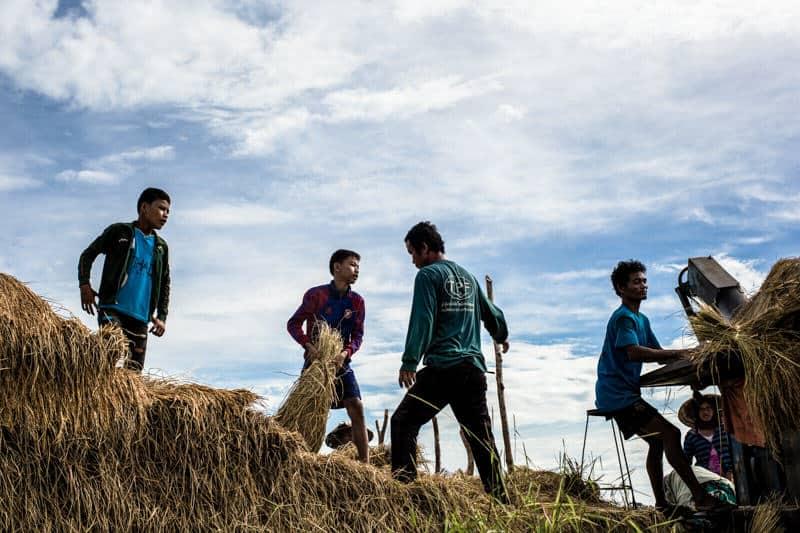 A group of men sorting rice in Laos