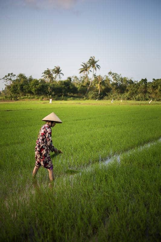Woman in a rice field in Vietnam