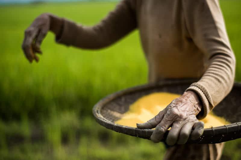 Rice field farmer in Vietnam