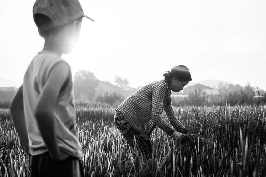 Vietnam farm where a boy and his mother are working in the field
