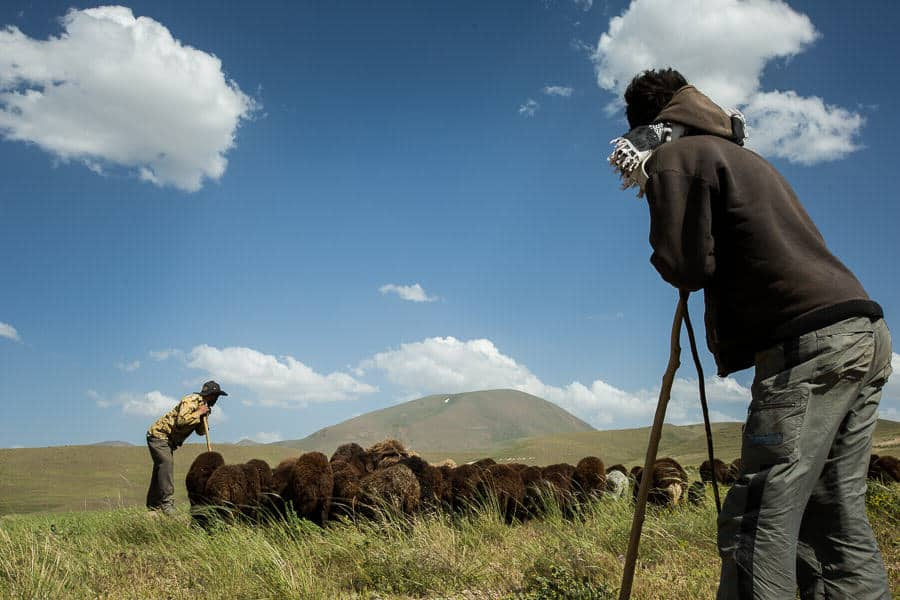 2 men herding sheep near Kandovan
