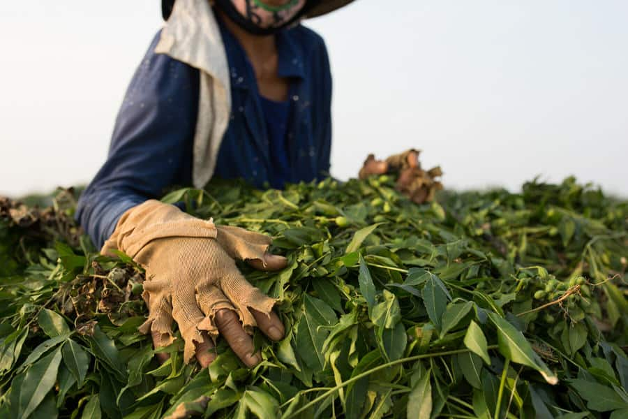 Photographing a peanut farmer in Vietnam with Pics of Asia