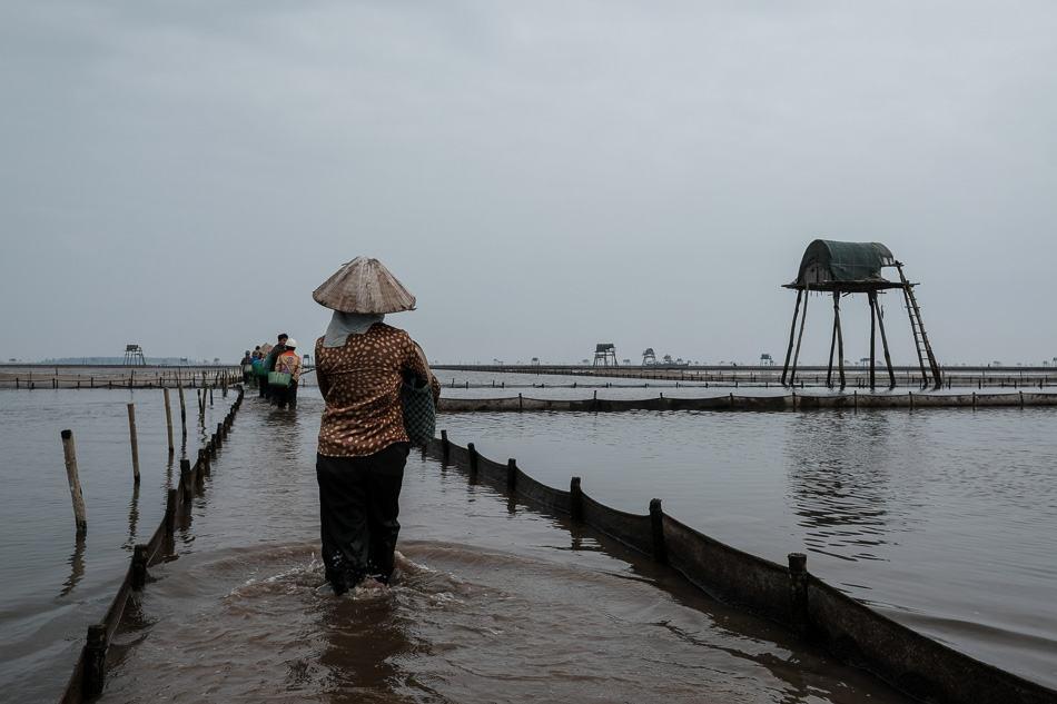 clam farmers in thai binh, Vietnam