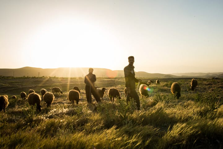 Sheep and Farmers In Golden Light Of Setting Sun Near Tehran Iran - Pics Of Asia Photography Tours