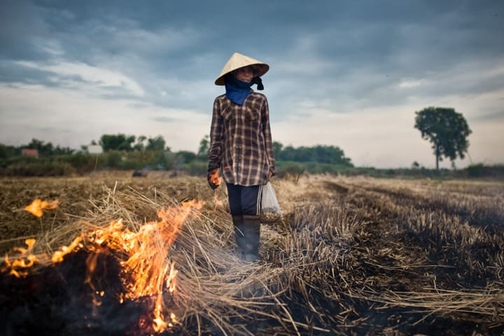 Fire clears away the cut stalks at the end of a successful harvest season in the Delta, Vietnam - Pics Of Asia Photo Workshop Tours