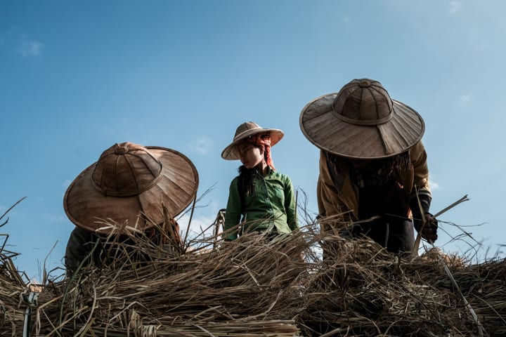 Three woman stand over their hay harvest in the fields of Myanmar - Taken On Tour With Pics Of Asia