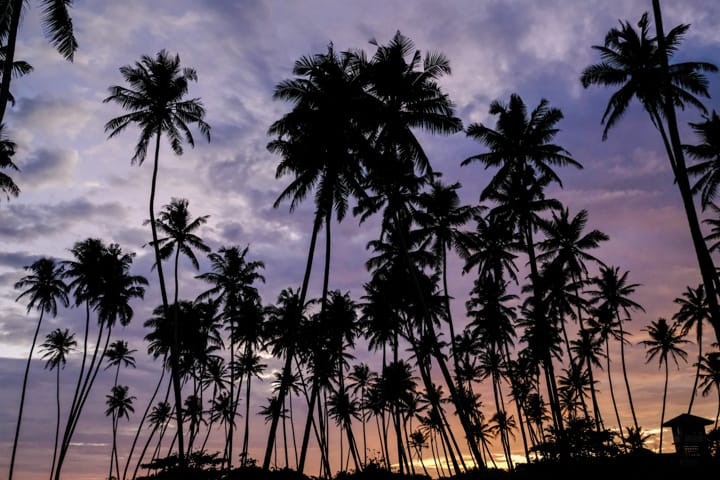 Black palm trees on a rainbow colour sun set in Sri Lanka - Pics Of Asia Phototours And Workshops