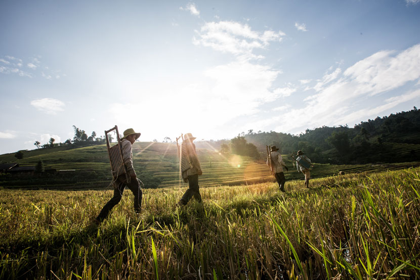 Sun rises up behind a hill over a Vietnamese rice field - Pics of Asia