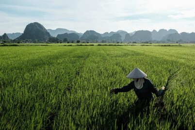 A farmer tends to the crops on a sunny day in Ninh Binh, Vietnam