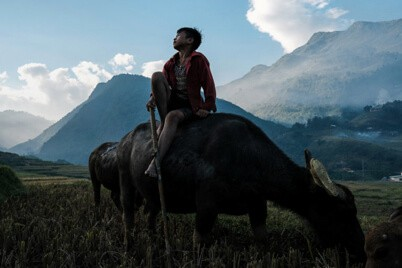 Young boy sit on a water buffalo in Northern Vietnam