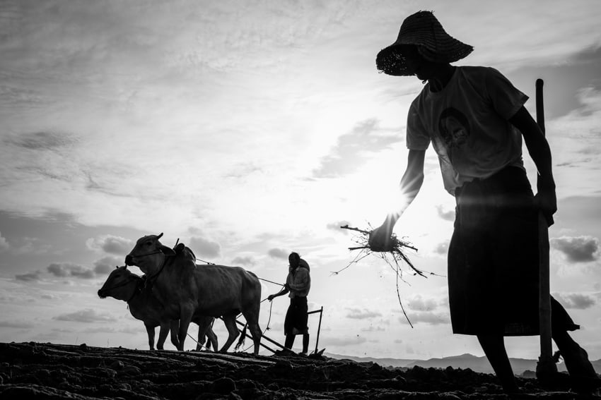 Farmers in Myanmar at sunset