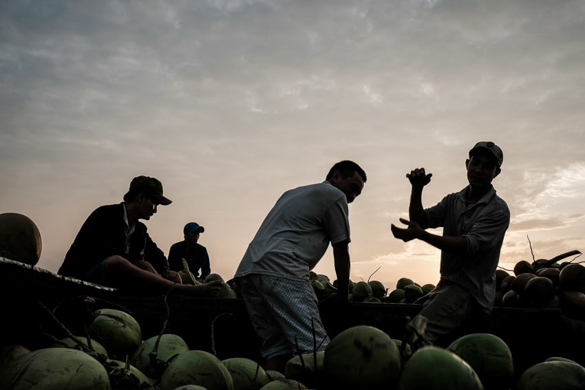 a group of men unloading coconuts at sunrise in the market of Long Xuyen in South Vietnam
