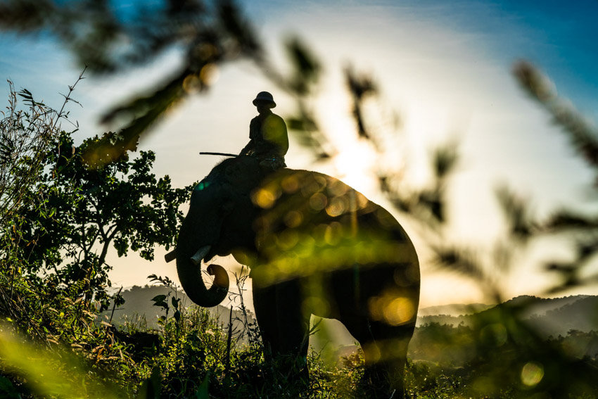 A mahout grazes his elephant at day's end on a rural hill in Dak Lak, Province Central Vietnam. Photo by Quinn Ryan Mattingly