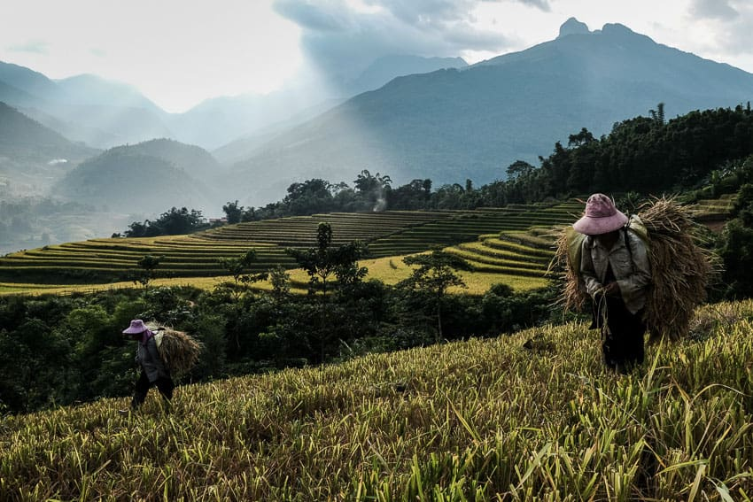 Hmong people carrying rice during the harvest in Muong Hum during a Pics of Asia photography workshop