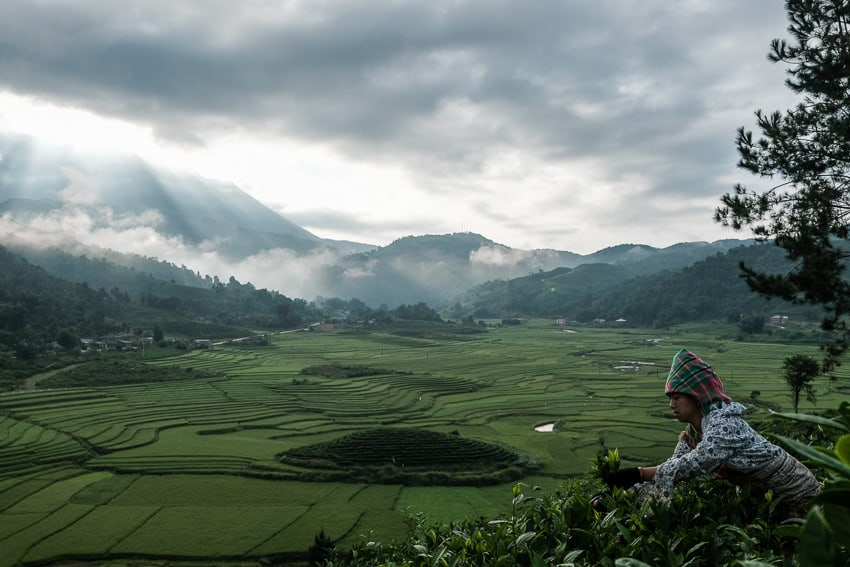 A wide landscape of the valley of Tan Uyen at sunrise where Tai women pick up tea laves, during a Pics of Asia photography tour