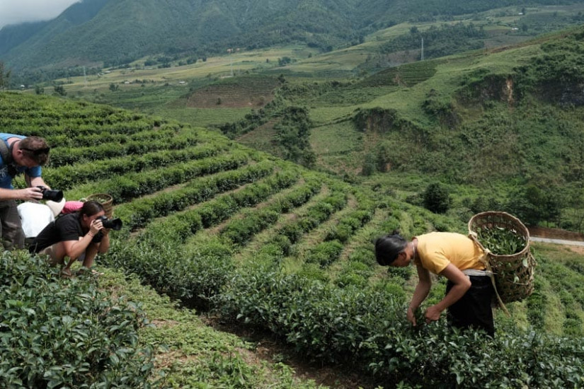 Photography group taking photos in tea fields in North Vietnam with Pics of Asia