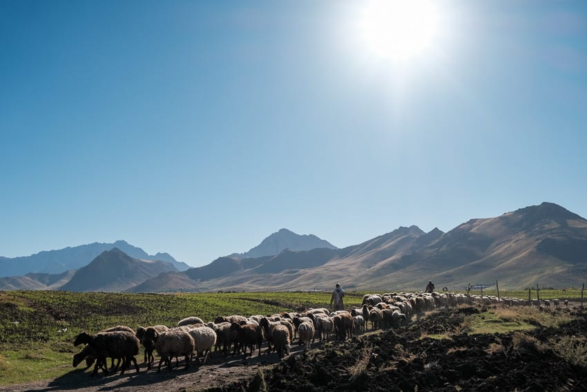 Men herding there sheep in the countryside of Kermanshah during Pics of Asia photography tour in Iran