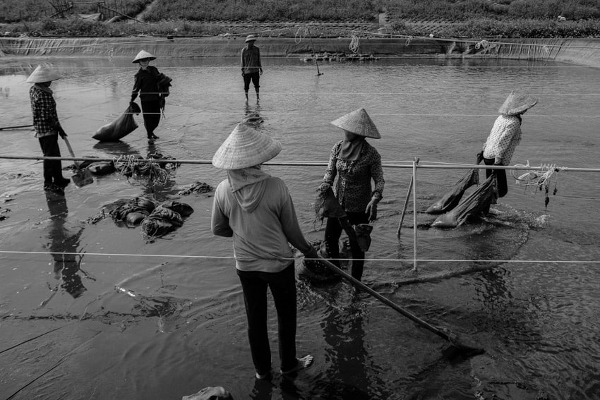 A group of women working in a clam farm on the coast of Nam Dinh, Vietnam during Pics of Asia photography tour