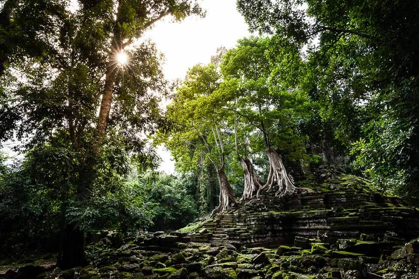 Photo by Regis Binard of the jungle on the temples of Angkor, Cambodia
