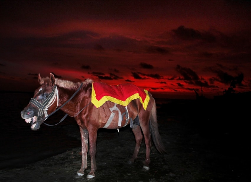 A photograph of a horse in Bangladesh taken by Nayeem Jabaz for an article about flash photography with Fujifilm for Pics of Asia