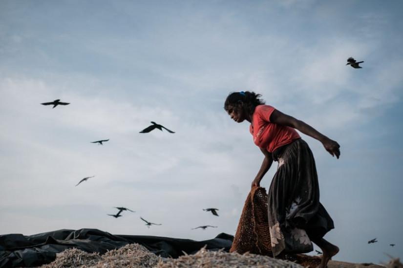 A Sri Lankan women working on the beach of Negombo in Sri Lanka