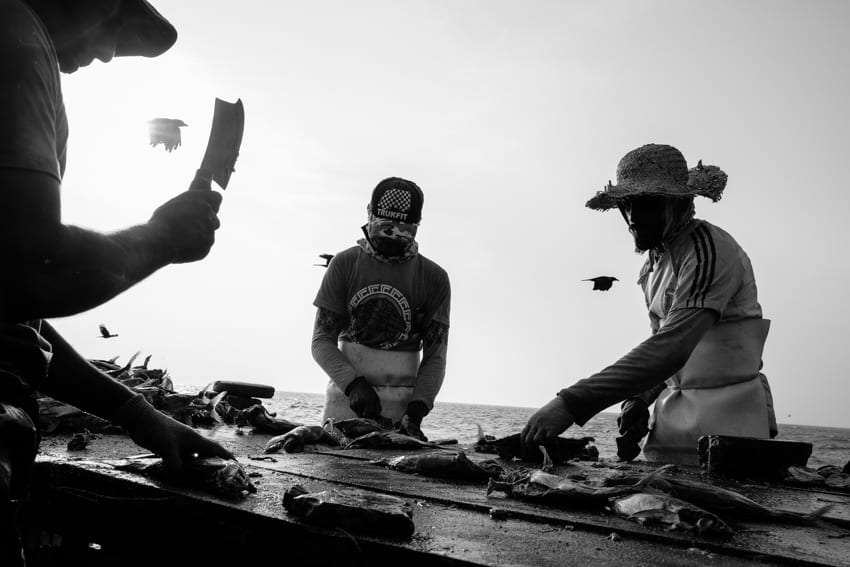 Fishermen cutting fresh fish before it is dried in the sun on the beach of Negombo during a photography tour with Pics of Asia