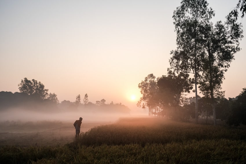 The fields around Dinajpur are covered in mist after sunrise, Bangladesh