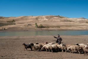 Sheep herder leading his herd along a blue lake in the Iranian Kurdistan