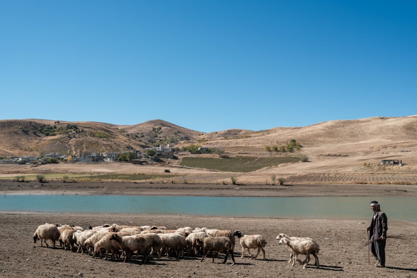 a sheep herder and his herd walking back to their village near a blue lake in the Iranian Kurdistan during a photography tour by Pics of Asia
