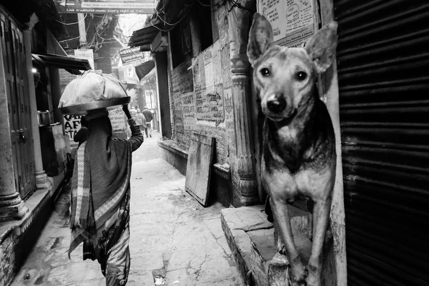 A dog and a woman walkign the narrow alleyways of Varanasi, India