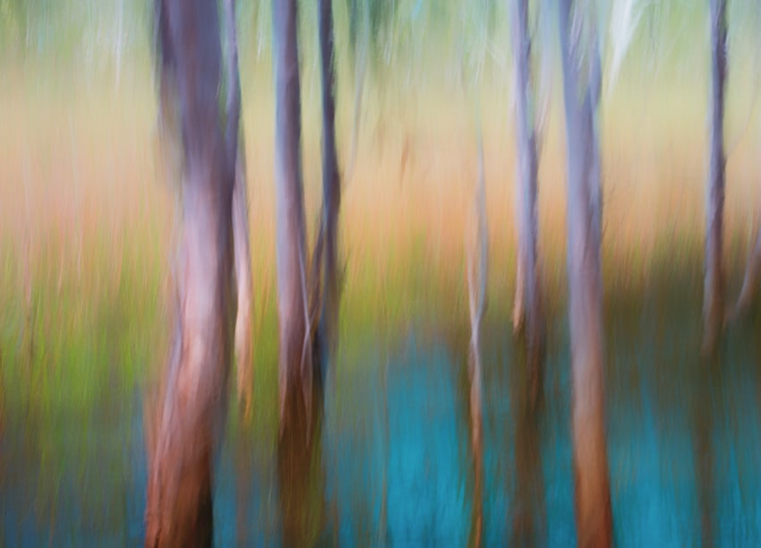 Showcasing intentional camera movement. Copyright Janet Powick.
