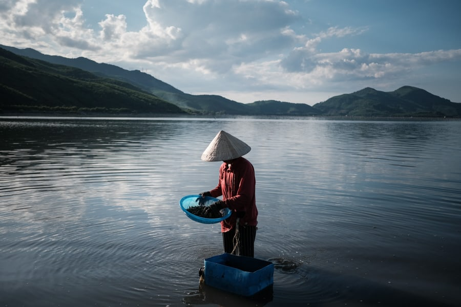 Woman harvesting small snails in Lang Co lagoon at sunset during a photography tour in Vietnam with Pics of Asia