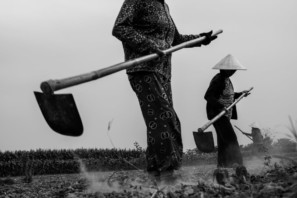 3 farmers work in a field in central Vietnam on a photo tour with Pics of Asia