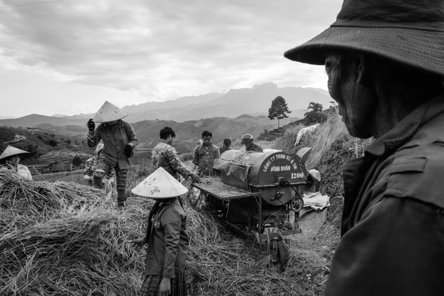 Rice harvest by the Hmong people in North Vietnam with Pics of Asia photo tours