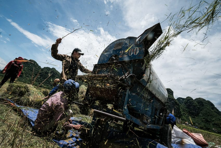 people harvesting rice in Phong Nha with Pics of Asia