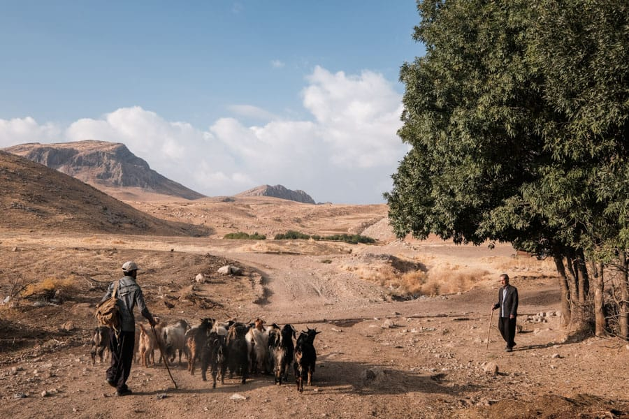 taking photos of the sheep herders in Kurdistan on a photography tour with Pics of Asia