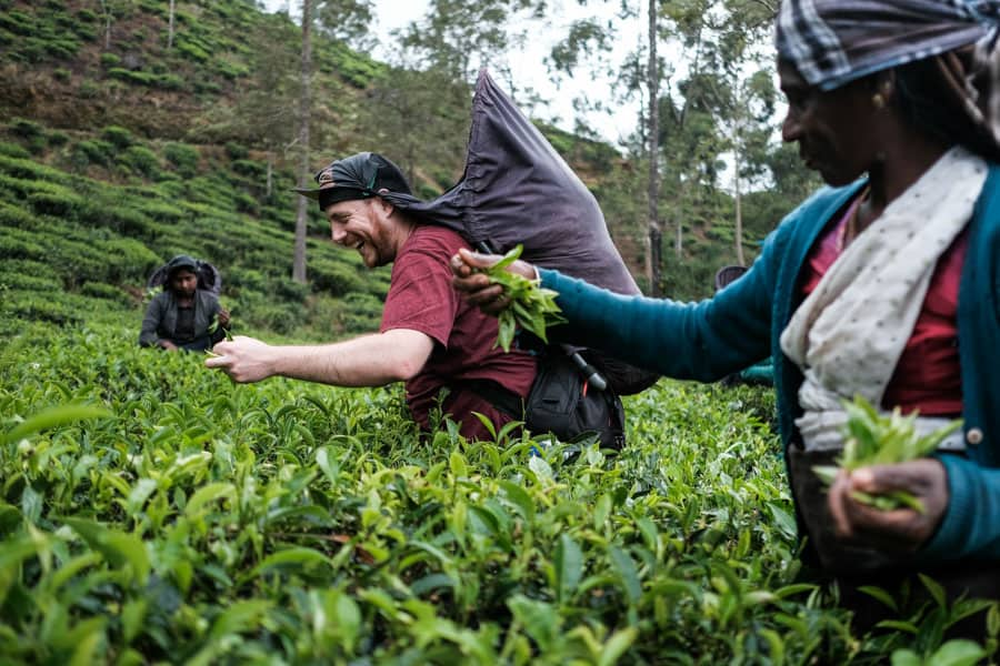 A participant of Pics of Asia photography tour in Sri Lanka picking up tea leaves with the local ladies
