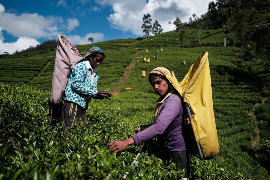 Capturing the tea leaf pickers in Sri Lanka with Pics of Asia