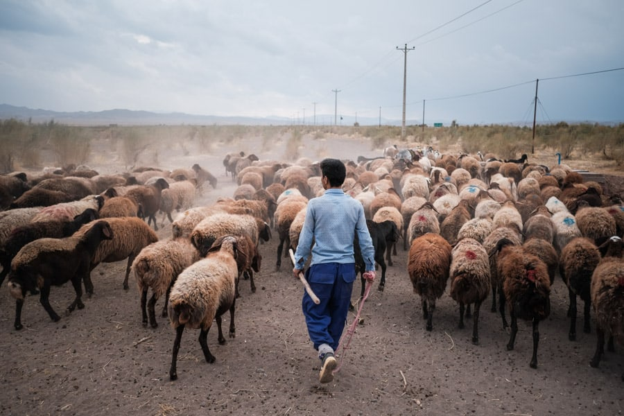 Meeting the shepherds of Khorasan on a photo tour with Pics of Asia