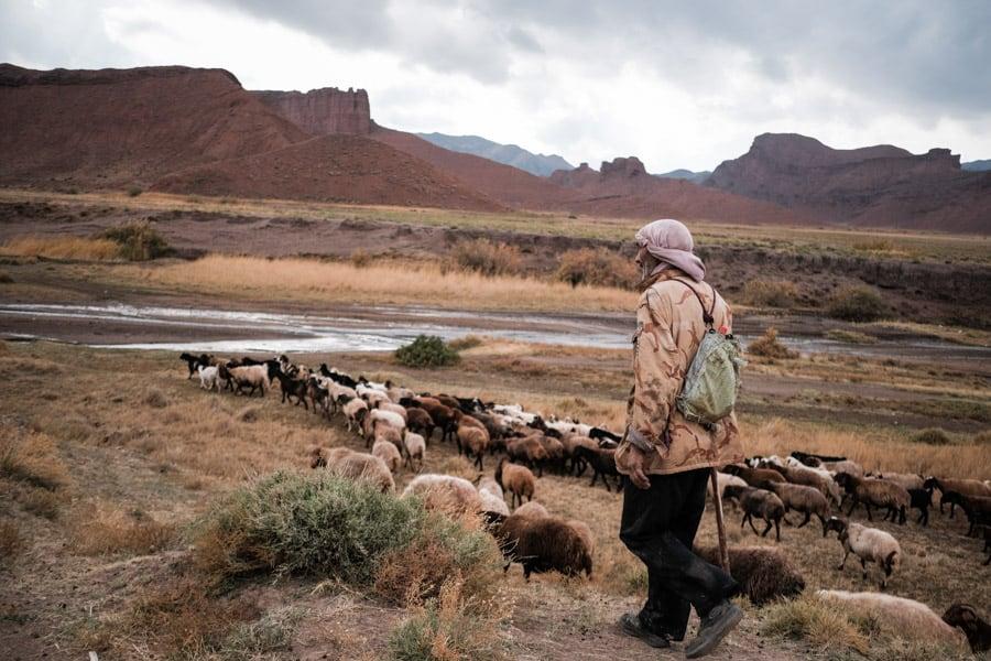 Khorasan sheep herder