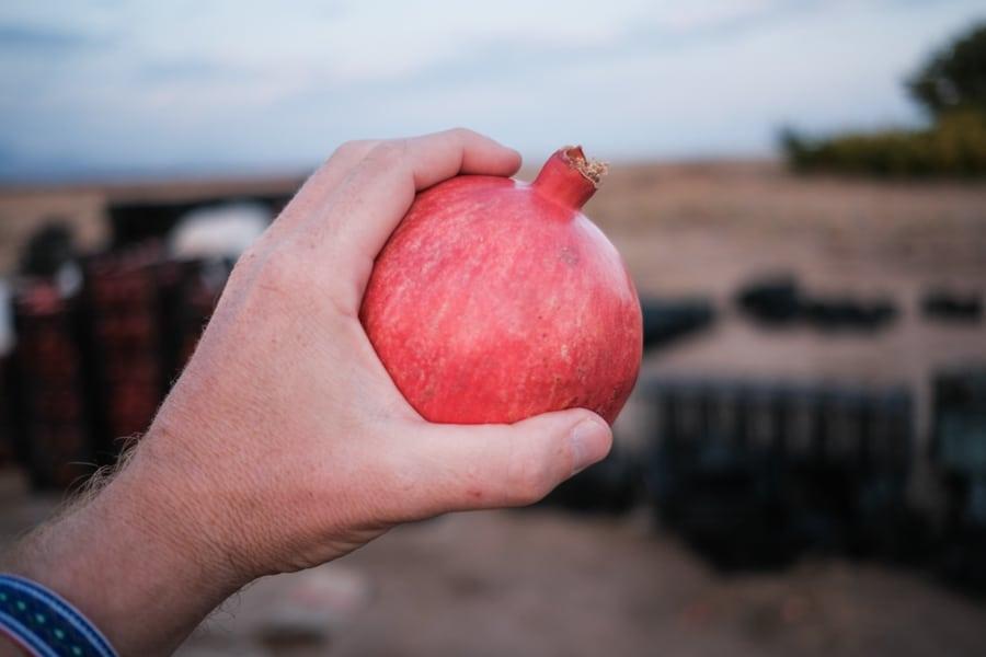 a huge pomegranate in Khorasan, Iran