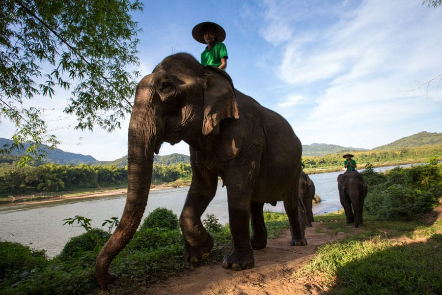 A man riding an elephant along a river in North Laos