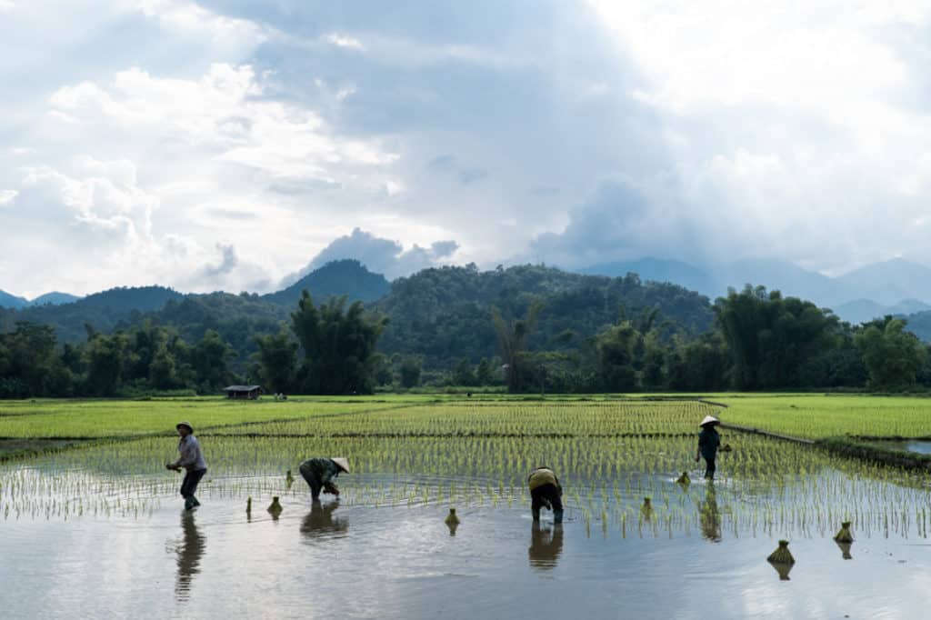 A group of farmers planting rice in Bac Kan region in North Vietnam